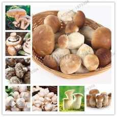 30 Pcs - Edible Mushroom Bonsai Delicious Nutritional Value Vegetables